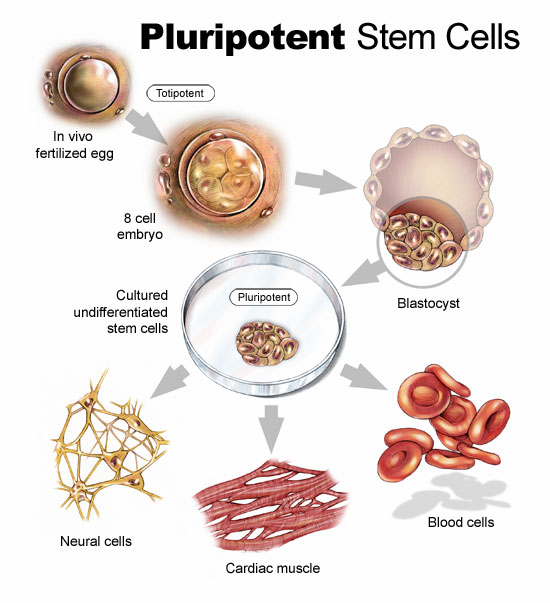 research paper stem cell research